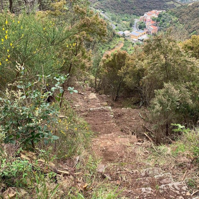 🇺🇸🥾⚒️🪚We finished clearing the stone stairway at the top of the Riè Trail.  It's almost 100 meters long, and it gains about 40 meters of elevation.  On both sides it is bordered by terraced fields that are now abandoned, but the dry stone walls that support them are clearly visible.  🇮🇹🥾⚒️🪚Abbiamo finito di ripulire la scalinata in pietra in cima al Sentiero Riè. È lunga quasi 100 metri con 40 metri di dislivello. Su entrambi i lati è delimitata da campi terrazzati oggi abbandonati, ma sono ben visibili i muri a secco.  #cinqueterre #trails #historictrail #stairs #drystonewall #trailrecovery #trailmaintenance #volunteer #lovegeneration #takeaction  #montelecrocitrailpark