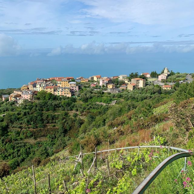 🇺🇸🥾Not only does Trail N. 530 from Volastra connect to the vertical trails from Manarola and Riomaggiore, it also intersects the 3 trails from Groppo that we  recently reopened.  🇮🇹🥾Il Sentiero N. 530, che parte da Volastra, interseca i sentieri verticali che salgono da Manarola e Riomaggiore e ora anche i tre nuovi sentieri riaperti Val di Chiara, Zunché, Rié, che partono dal Groppo.  #montelecrocitrailpark #trails #outdoorparadise #trailrecovery #trailmaintenance #volunteer #takeaction #cinqueterre #liguria #italy