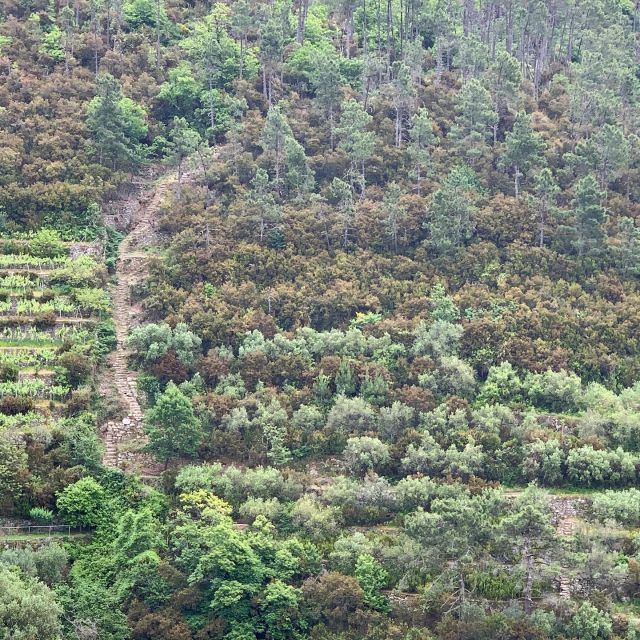 🇺🇸🥾The Val di Chiara stairs  🇮🇹🥾La scalinata di Val di Chiara  #montelecrocitrailpark #trails #stairs #outdoorparadise #greatoutdoors #trailrecovery #trailmaintenance #volunteer #takeaction #cinqueterre