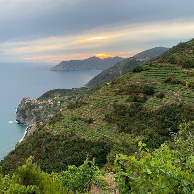 """The Cinque Terre are often described as """"5 fishing villages"""", but they exist because of wine.   #cinqueterre #winevillages #winecountry #vineyard #cinqueterrewine #drystonewall #winedestinations #nationalpark #liguria #italy"""