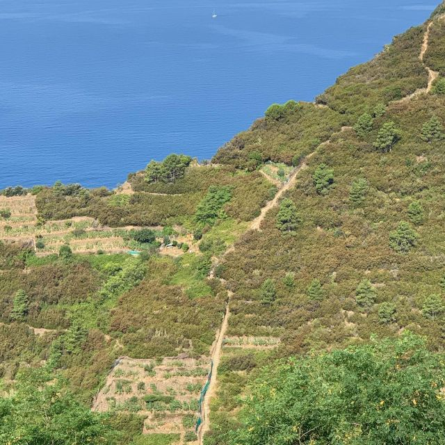 """🇺🇸🥾This is the """"Beccara"""" Trail (N. 531), on the Riomaggiore side, as seen from Trail N. 501.  🇮🇹🥾Il Sentiero della """"Beccara"""" (N. 531), lato Riomaggiore, visto dal Sentiero N. 501.  #riomaggiore #cinqueterre #nationalpark #liguria #italy #trails #stairs #hiking #trailrunning #adventure #cinqueterretrekking #wheretonext #sciacchetrail"""