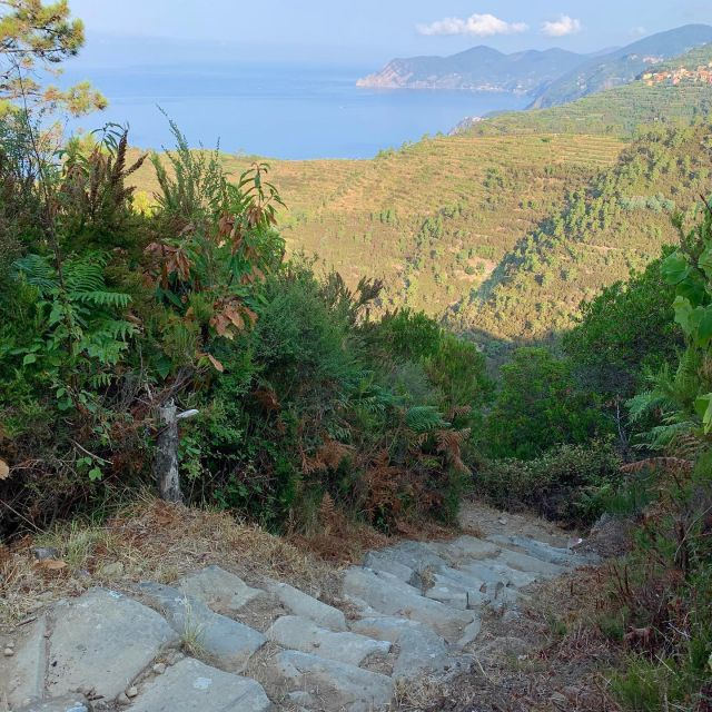 Trail N. 501  #cinqueterre #nationalpark #liguria  #italy  #trails #hiking #trailrunning #outdoor #adventure