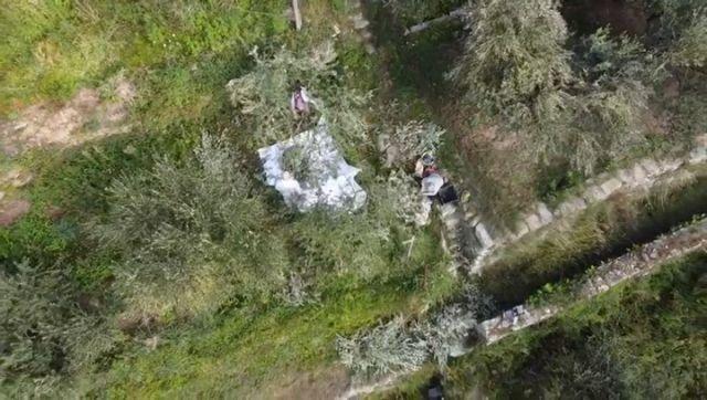 The olive harvest is happening now.  #olive #olivetree #oliveoil  #evoo #cinqueterre #nationalpark #liguria #italy #harvest #autumn